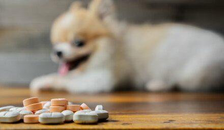 Mittel gegen Hundeerkrankung könnte als 3CL-Inhibitor gegen SARS-CoV-2…