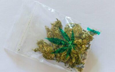 Drogenbeauftragte setzt sich für bundeseinheitliche…