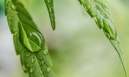Cannabis (THC) bei Tumorkachexie und Appetitlosigkeit (neue Studie)