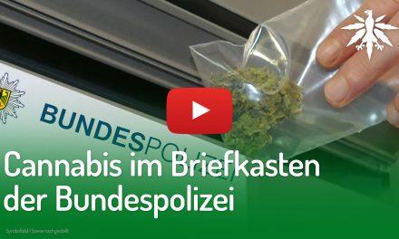 Cannabis im Briefkasten der Bundespolizei | DHV-Video-News #209