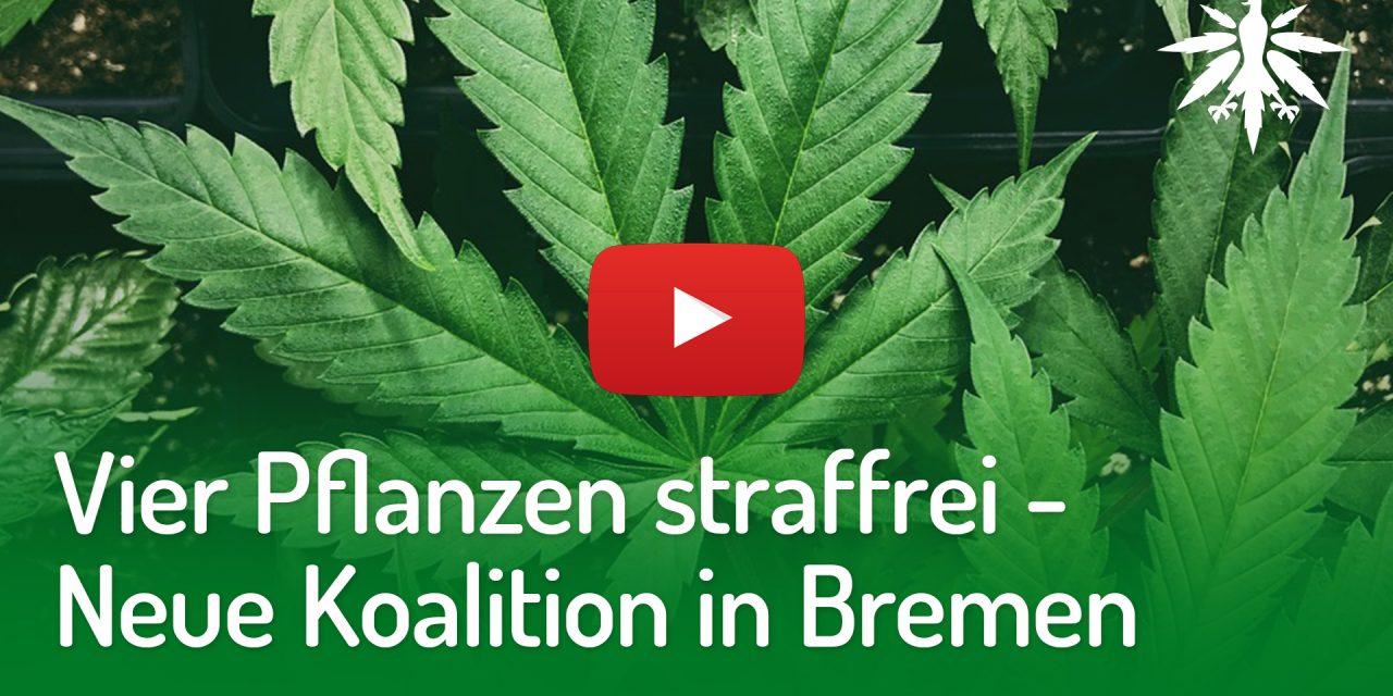 Vier Pflanzen straffrei – Neue Koalition in Bremen | DHV-Video-News #211