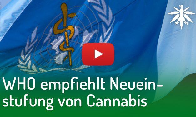 WHO empfiehlt Neueinstufung von Cannabis | DHV-Video-News #194