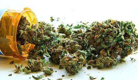 BfArM erteilt Zuschlag für den Vertrieb von Cannabis