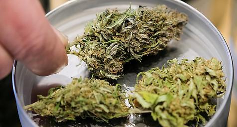 Bundesinstitut lehnt Modellversuch zu Cannabis in Berlin ab