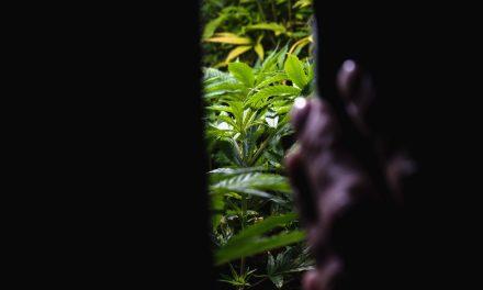 Eigenanbau wegen Lieferengpass: Bayreuther Patient kommt straffrei davon