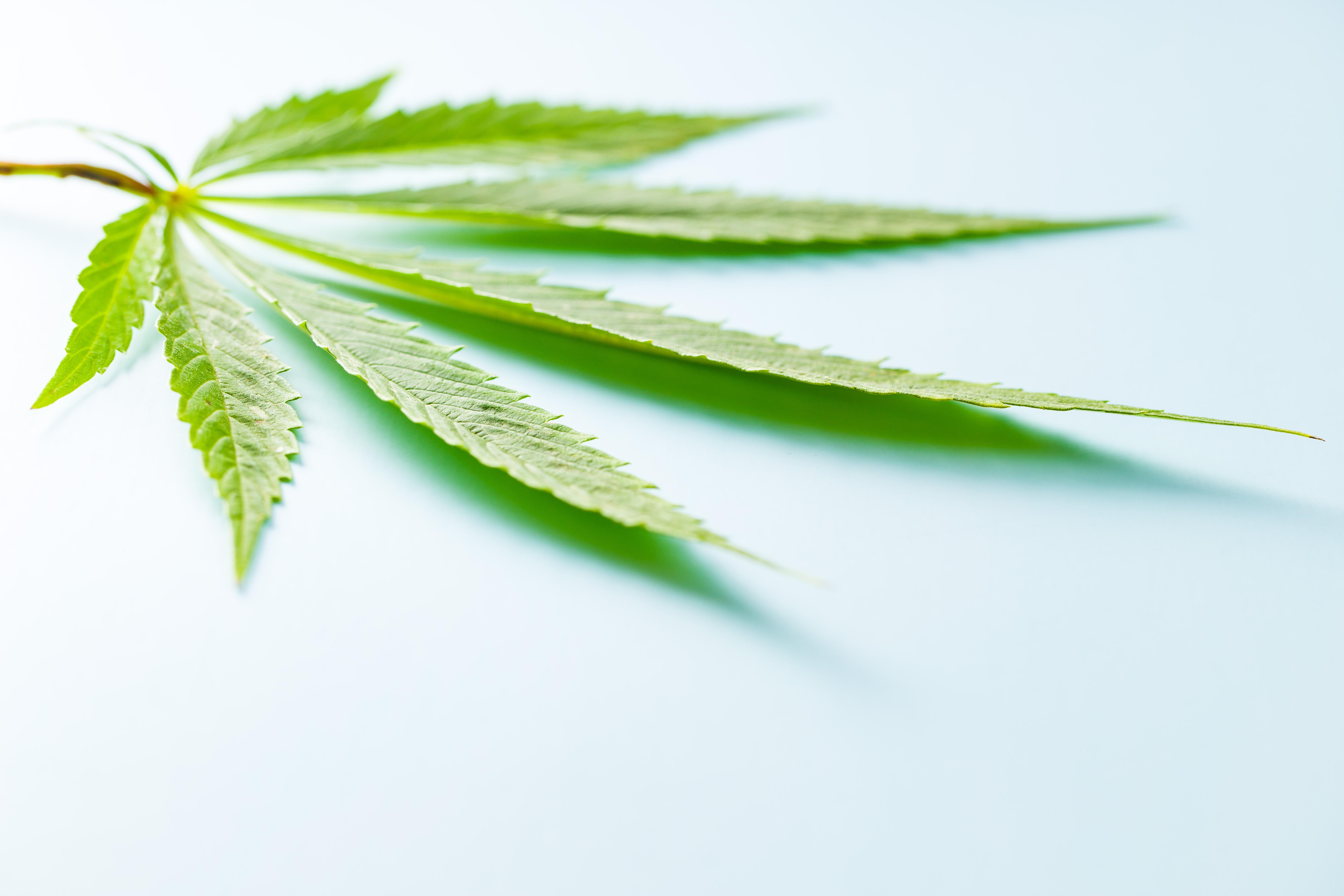 [Fallbericht] Cannabisvollextrakt-Öl bei metastasiertem Brustkrebs mit zahlreichen Nebenerkrankungen – eine beispiellose Erfolgsgeschichte