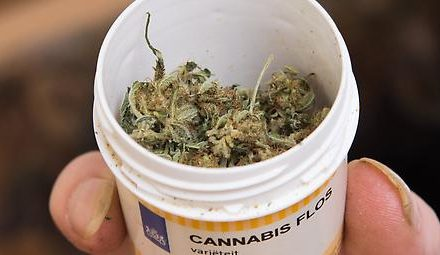Mehr Erstkonsumenten in Kanada nach Legalisierung von Cannabis