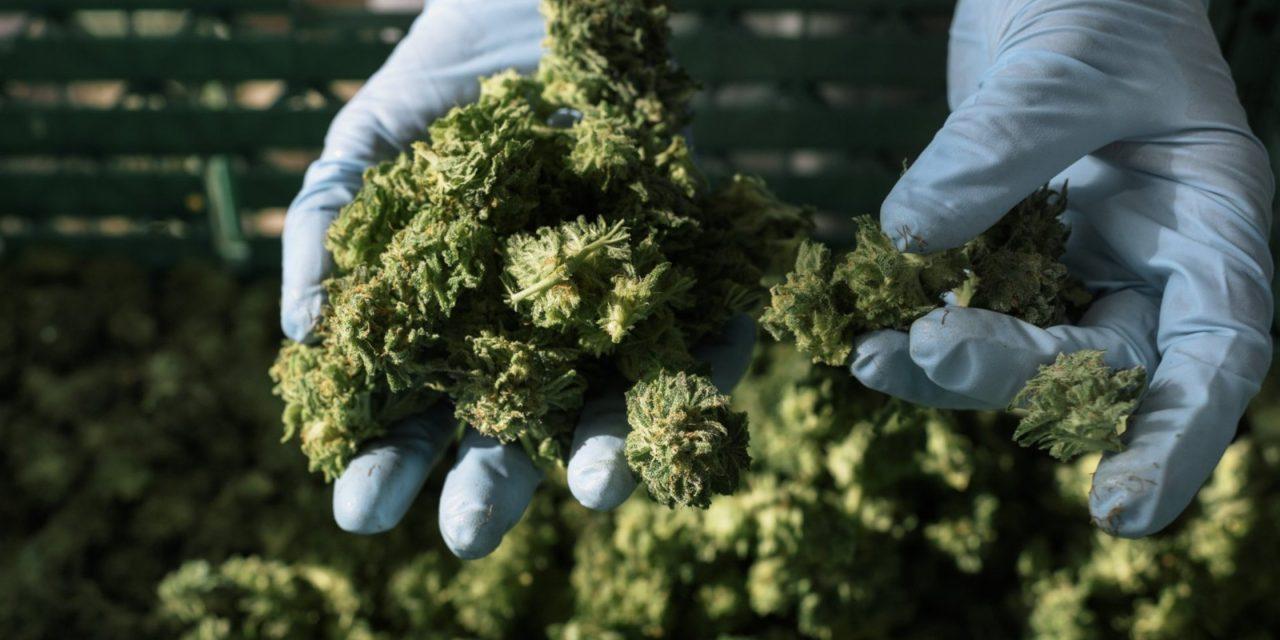 Suchtstoffkontrollrat warnt vor laxer Kontrolle von medizinischem Cannabis