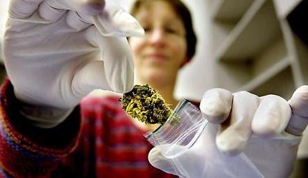 Erste Zuschläge für Cannabisanbau in Deutschland zu medizinischen…
