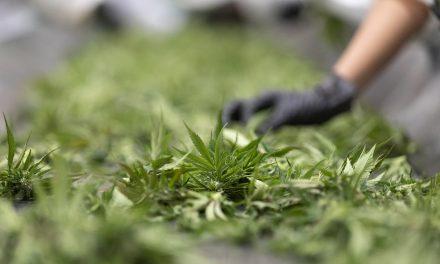 Nachfrage nach medizinischem Cannabis steigt rasant