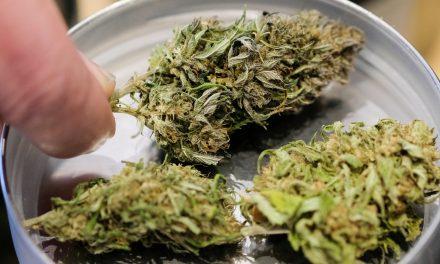 Verbliebene Zuschläge für Anbau von medizinischem Cannabis erteilt