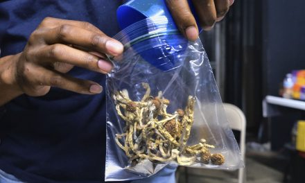 Halluzinogene Pilze könnten neues Drogenproblem werden