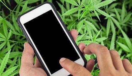 Cannabis: Institut will App zur Suchtentwöhnung erforschen
