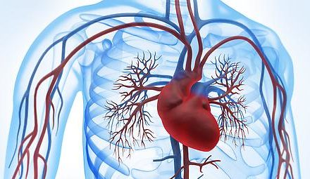 Isoflavone und Tofu senken Herz-Kreislauf-Risiko
