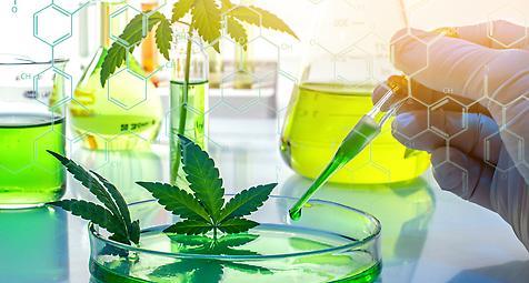 Bundesverband pharmazeutischer Cannabinoidunternehmen gegründet