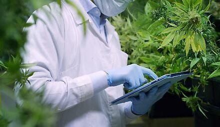 Krankenkasse muss Cannabis gegen Schlafapnoe nicht bezahlen