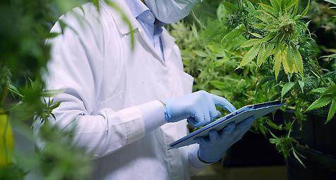 Cannabis hilft bei Morbus Parkinson