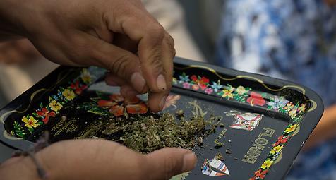 Legalisierung von Cannabis in Mexiko schreitet voran