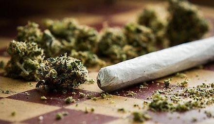Wirtschaftsrat in Frankreich empfiehlt Legalisierung von Cannabis