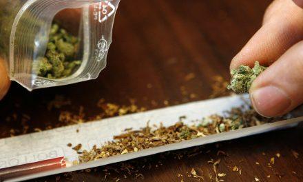 Südschleswigscher Wählerverband fordert Modellversuch mit Cannabis