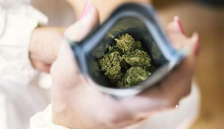 EU-Parlament will Cannabiseinsatz in der Medizin vorantreiben