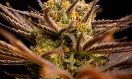 """EU-Parlamentsresolution zu Cannabis: Kommt jetzt ein """"Lex Sativex""""?"""