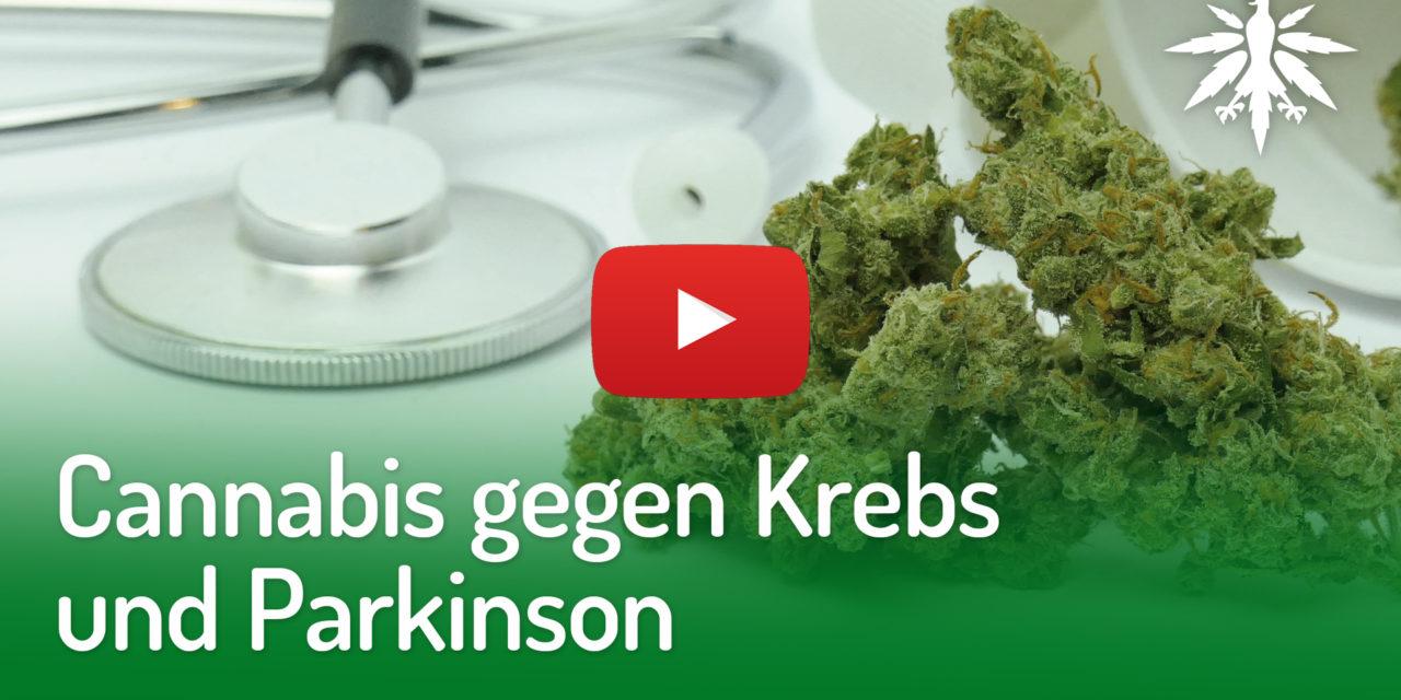 Cannabis gegen Krebs und Parkinson   DHV-Video-News #265