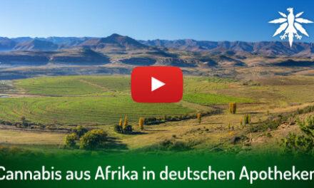 Cannabis aus Afrika in deutschen Apotheken   DHV-Video-News #302