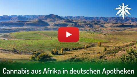Cannabis aus Afrika in deutschen Apotheken | DHV-Video-News #302