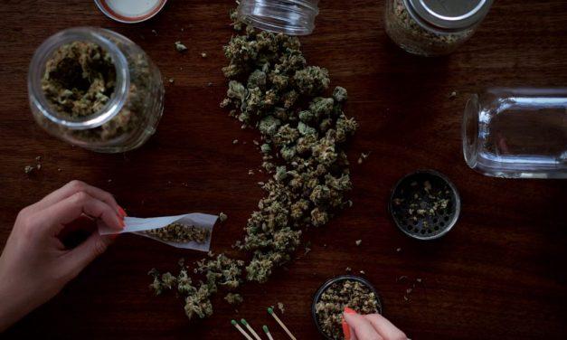 Cannabis trocknen – Schritt für Schritt — HANF.biz